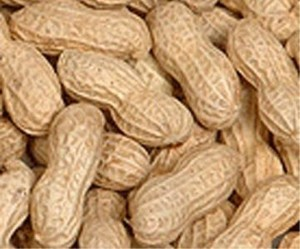 peanuts-in-shells