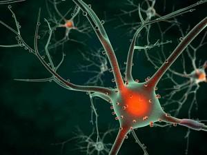 sel-otak-dari-air-seni-manusia