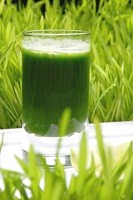 wheatgrass_green_drinks