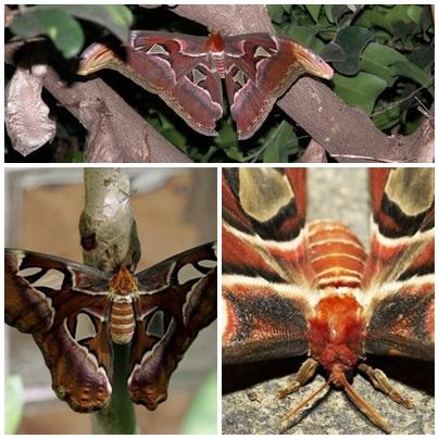 moth combine